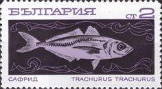 Mediterranean Horse Mackerel (Trachurus trachurus)