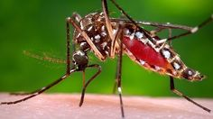 Formas naturales de espantar a los mosquitos, con cosas que tienes en casa | ConSalud.info