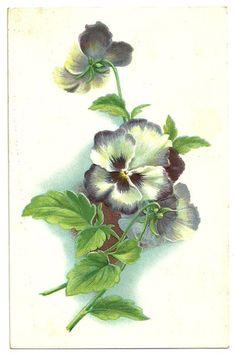 Vintage 1910 Tuck's Floral Postcard