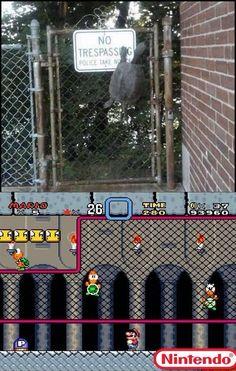 Koopa Troopa IRL http://cheezburger.com/8796455680/video-games-in-real-life-koopa-troopa-turtles