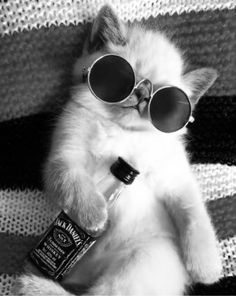 Black And White Picture Wall, Black And White Wallpaper, Black N White, Black And White Pictures, Gray Aesthetic, Black Aesthetic Wallpaper, Black And White Aesthetic, Funny Cat Wallpaper, Animal Wallpaper