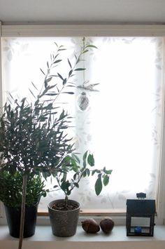 Winter garden @christamakinen Winter Garden, Gardens, Indoor, Plants, Interior, Outdoor Gardens, Plant, Garden, House Gardens