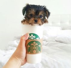 1000 Images About Cute Animals On Pinterest Cute