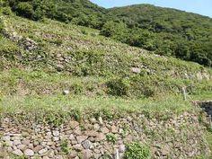 谷山の段々畑 - 鹿児島の自然と食