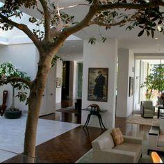 Love a tree inside the home.
