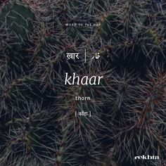 Urdu Words With Meaning, Hindi Words, Urdu Love Words, Foreign Words, Poetic Words, One Word Quotes, Dictionary Words, Rare Words, Aesthetic Words