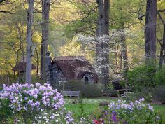 Look at that dogwood in bloom. The flowers look like they are floating faeries...