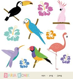 Tropical Birds Clipart Set for instant download by dariakonik, €2.50