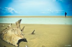 Inani Beach, Cox's Bazar, Bangladesh (Nakib Thyself Photography)