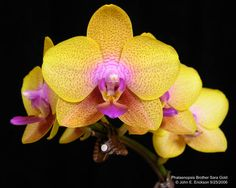 WINTERIZING YOUR ORCHIDS -- Really good article about how to care for your orchids during the cold winter months.