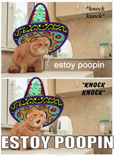 "@Victoria Rose-Mail  ""Estoy poopin!"" in spanish"