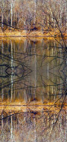 Tree photography reflection Art