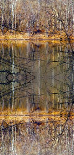 Tree photography reflection Art