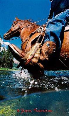 Love this action shot of a horse and cowboy riding through the water. Foto Cowgirl, Cowgirl And Horse, Horse Love, Horse Riding, Trail Riding, Pretty Horses, Beautiful Horses, Country Life, Country Girls