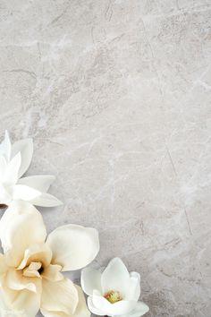White Flower Background, Flower Background Wallpaper, Flower Phone Wallpaper, Flower Backgrounds, Background Patterns, Magnolia Wallpaper, Framed Wallpaper, Phone Wallpaper Images, Wallpaper Backgrounds