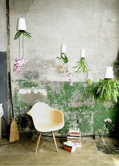 Suspendre les plantes au plafond