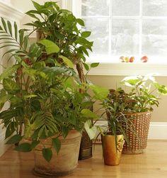 Los cuidados básicos de las plantas de interior. Tenlos en cuenta para hacer que tus plantas estén fuertes y saludabes… El abono: cuando una planta está en su hábitat natural obtiene todo del…