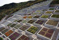 Tadao Ando-淡路夢舞台