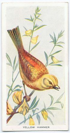Birds of the Countryside : series of 50.