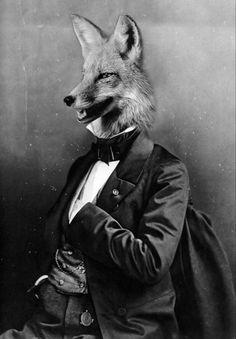 Fox hand in suit suit