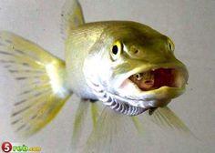 Very Rare Sea Animals 40 Best Rare An...