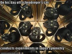 Science Caturday: Schrodingers Cat is Named SUSY? Hate Cats, Silly Cats, Cats And Kittens, Big Cats, Crazy Cats, Funny Cat Memes, Funny Cats, Funny Animals, Animal Funnies