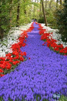 Flowers river, Keukenhof, Netherlands
