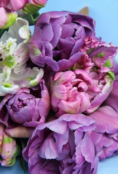 A bouquet of lovely 'Peony style' Tulips.
