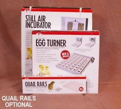 Little Giant Starter Egg Incubator Combo Kit Egg Incubator, Little Giants, Quail Eggs, Kit, Livestock, Knowledge, Search, School, Searching