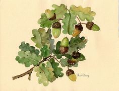 acorn leaves - Google Search