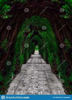 Photo about Arched Tui tunnel in the yard of Alhambra palace in Granada, Spain. Image of garden, beauty, gardens - 159364193 Pictures For Sale, Granada Spain, Arch, Sidewalk, Garden, Longbow, Garten, Side Walkway, Lawn And Garden