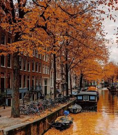 Visit Amsterdam, Landscaping Images, Autumn Scenes, Cities In Europe, Wonderful Picture, Amsterdam Netherlands, We Fall In Love, Great Memories, Travel And Leisure
