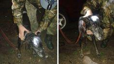 Wrzucił psa do rzeki, zwierzę uratowali wędkarze
