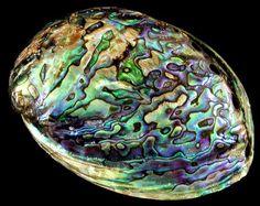 Abalone - Casca de molusco usada em joias e esculturas. Usada pelos Xamãs, esta concha incorpora todos os aspectos do elemento água. Associada com a energia dos chakras - Gato Mistico