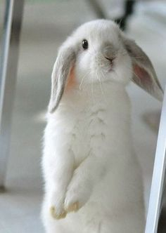 Lapin ~ Rabbit