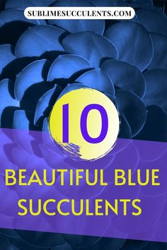 Have you ever seen a blue succulent bouquet? You might have seen one at a wedding or as a centerpiece, but we doubt it! These 10 beautiful blue succulents will inspire you to create interesting centerpieces or unique and aesthetic garden arrangements. Sublime Succulents has shared with you the colorful succulents they like. Take a look at this post to learn more. #bluesucculent #succuelnts #colorfulsucculents #succulentcare Colorful Succulents, Growing Succulents, Succulents Garden, Succulent Bouquet, Succulent Care, Tiny White Flowers, Yellow Flowers, Wall Collage Decor, Pink Leaves
