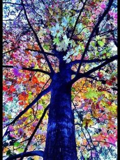 Beautiful Tree The changing of the season lets nature flaunt its beauty. This is what a tree will look like in heaven.all the colors on one tree Should you absolutely love arts and crafts you really will appreciate our info! Colorful Trees, Colourful Art, Jolie Photo, Pretty Pictures, Colorful Pictures, Beautiful World, Beautiful Sites, Beautiful Scenery, Beautiful Moments