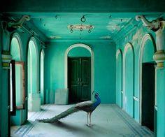 Royal Peacock, The Queen's Room, Zanana, Udaipur City Palace, India