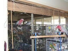 Tips For Birdsitting