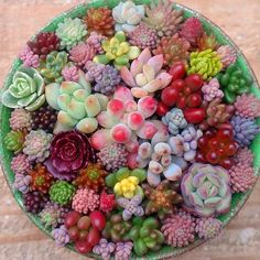 Beautiful variety of Succulents in a circular planter.