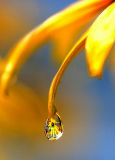 """""""Let your life lightly dance on the edges of Time like dew on the tip of a leaf."""" -Rabindranath Tagore"""
