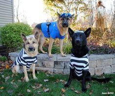 GSDs Halloween