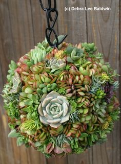 Succulent Container Gardens - hardy, low water plants creatively displayed.  For my globe I already own.