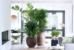 Een groen paradijs met palmen - Stek Woon & Lifestyle Magazine
