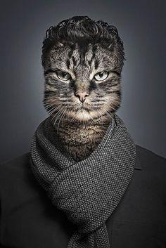 Undercats – Un photographe habille des chats à l'image de leurs propriétaires (image)
