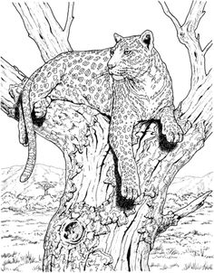 Leopard in the tree