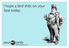 bird shit funny