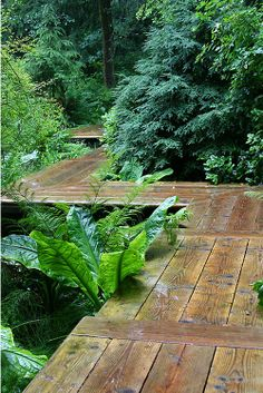 I like the raised walkway tropical gardens garden design, garden paths, w. Wooden Path, Wooden Walkways, Garden Structures, Garden Paths, Garden Landscaping, Landscape Architecture, Landscape Design, Japanese Garden Design, Shade Garden