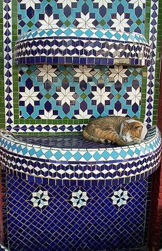 Cat in a Fountain in Morocco #catsinplaces  (Submission:Cat in Agadirbympudi97on Flickr.)