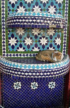 Cat Nap . Agadir Morocco